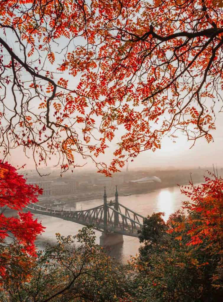 View of the Liberty Bridge through red leaves in Budapest