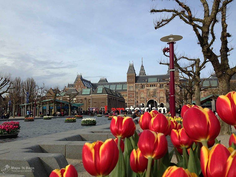 Red tulips and the Rijksmuseum in the background.