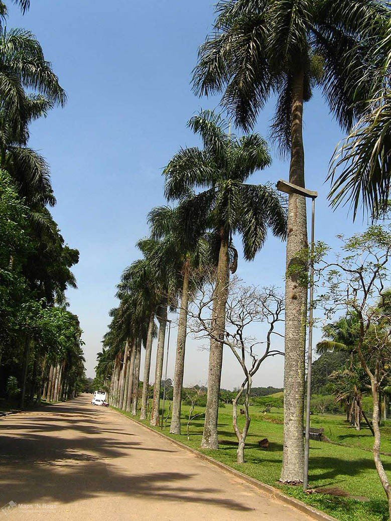 Botanical-Garden-palm-trees-sao-paulo-things-to-do-Brazil