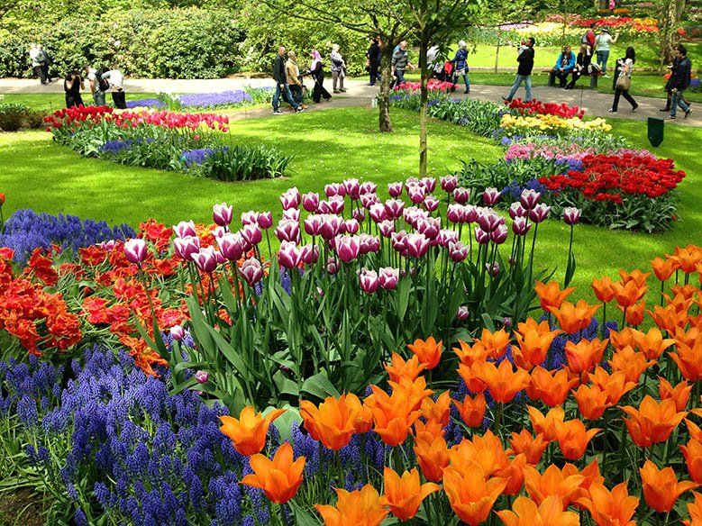 Colorful flowers and green grass in the Keukenhof Gardens while tourists walk around.