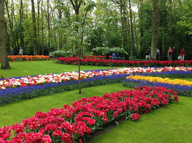 Keukenhof attracts many tourists every year, but since the park is only open for 8 weeks a year, you need to be there when the flowers are at their best. Here I provide you with helpful information, so you can get the most out of your visit to this stunning park. #keukenhof #flowers #keukenhofgardens #travel #netherlands #tulip