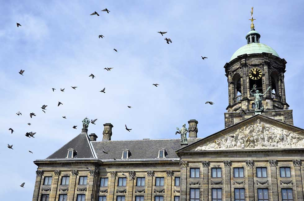 A part of the Dutch Royal Palace and many pigeons flying around a blue sky in Amsterdam. #photospots #Amsterdam #TheNetherlands #Holland #cities #europe #dutch #travel #bicycles #interiors #Beautiful #architecture #inspiration #picture #photography