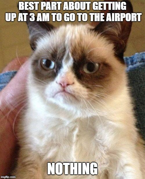 Grumpy cat travel meme