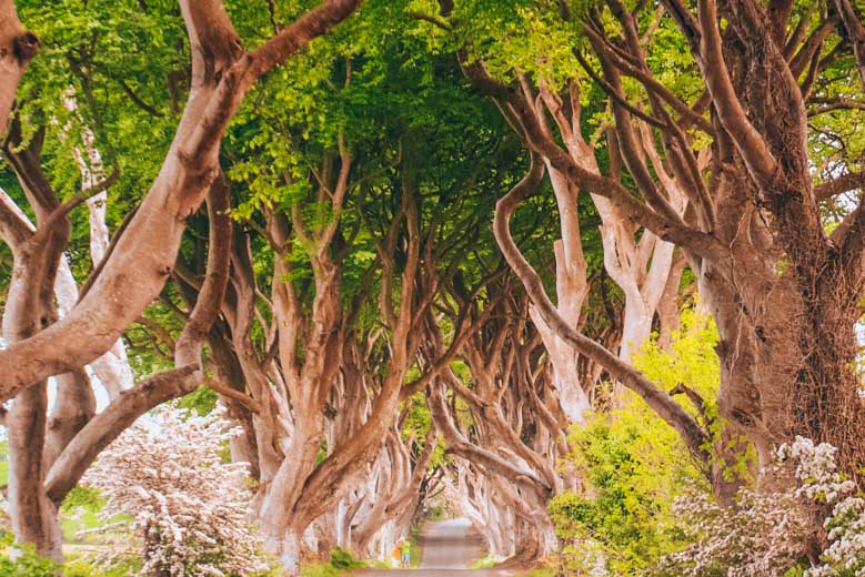 Dark Hedges in Northern Ireland is a Game of Thrones set and an excellent day tour from Dublin!