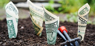 Money planted on the ground
