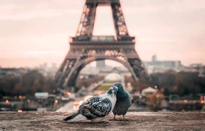 Birds kissing in front of the Eiffel Tower in Paris