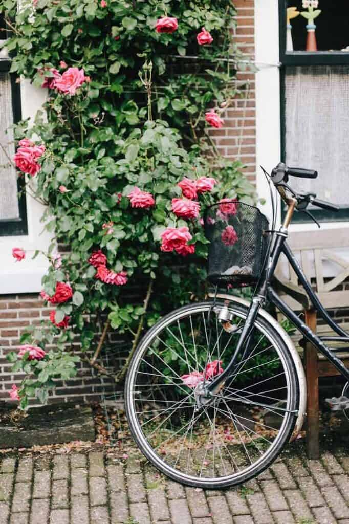 Spot romantic places in Amsterdam