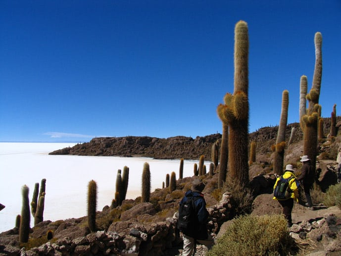 Fish Island in Bolivia covered with cacti