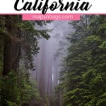 Quotes about California Pinterest graphic