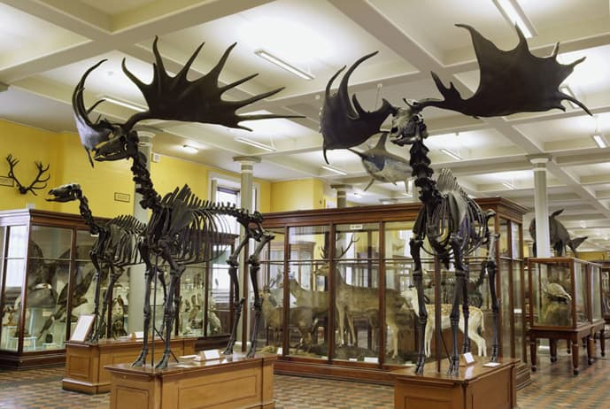 Natural History Museum in Dublin in a day