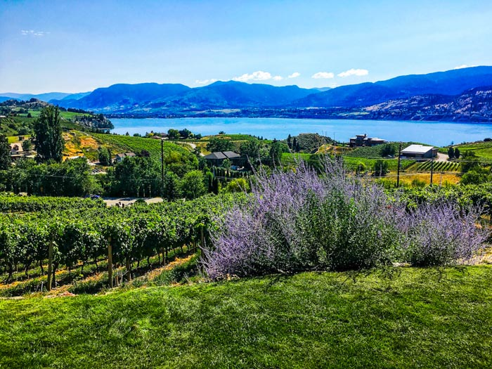 Kelowna winery and lavender field in Canada