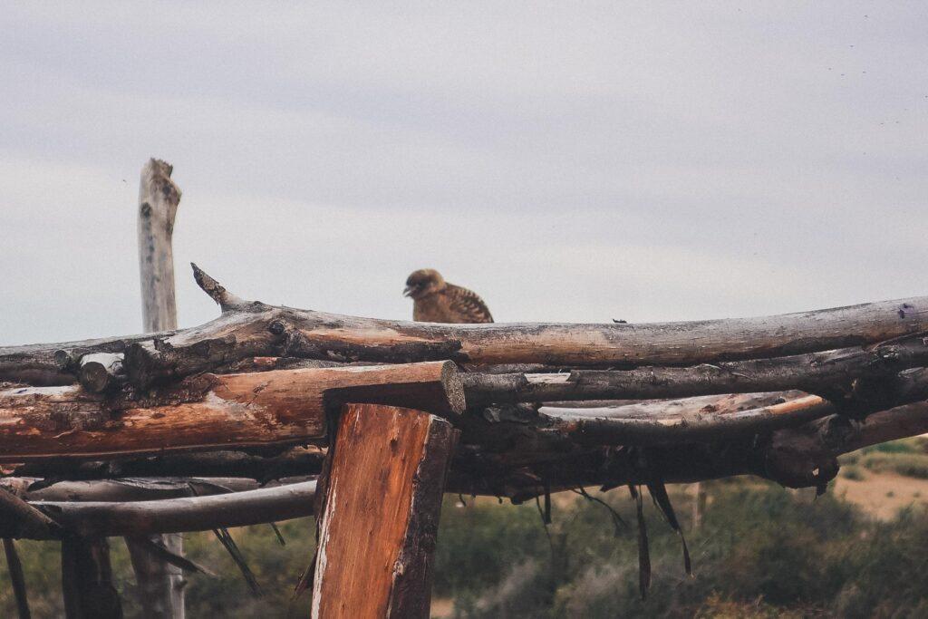 Bird sanctuary in El Calafate, Argentina