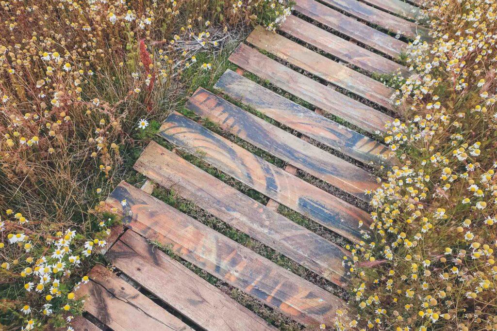 Path in Bird sanctuary in El Calafate, Argentina