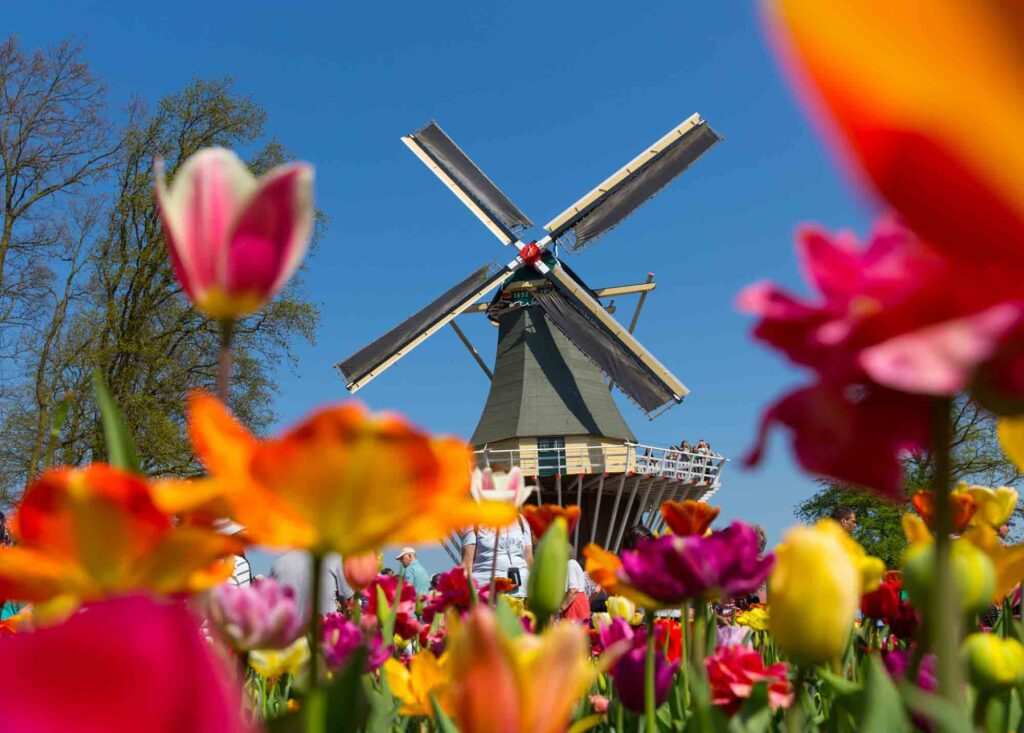 Lisse is one of the best Dutch towns